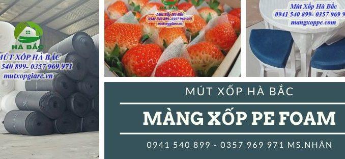 mang-xop-pe-foam-dang-cuon